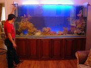 Обслуживание аквариумов,  запуск,  оформление,  лечение