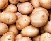 Картофель,  морковь,  капуста,  свекла,  лук