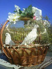 Белые голуби на свадьбу в эксклюзивной клетке