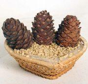 Продам ядро кедрового ореха