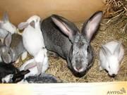 Спасите кроликов от мяса