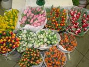 Продаются Тюльпаны ( Голландия )