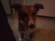 найдена маленькая собачка, район Сортировка!