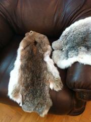 Продаются срочно шкурки кроликов