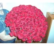 Дон Жуан XL (101 роза,  60 см)