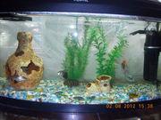 Продам аквариум 60 литров с рыбками