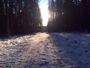Земельный участок с лесом