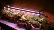 Системы светодиодного Фито освещения для растений