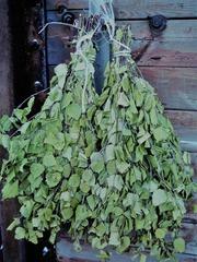 Веник березовый для бань и саун