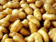 Оптовая поставка картофеля